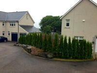 MR HEDGE - INSTANT EVERGREEN HEDGING - 6-8 FT TALL (180-250 cm) - BUSHY READY HEDGE GLASGOW