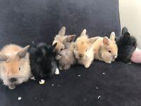 Beauiful bunnies
