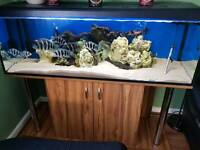 Fish tank with Frontosa