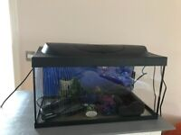 Tropical fish tank 60litre