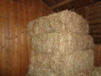 Hay for sale, small bales, good quality