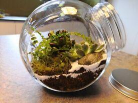 Plant terrarium in a jar
