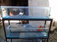 For sale fish house tank / aquariums