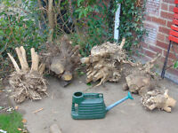 root balls free