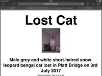 Missing since 3rd July snow leopard bengal mix