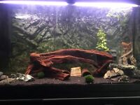 200Ltr Tank/Stand and fish and decor for sale