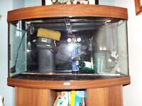 Aquarium Juwel 180 litre bow fronted tropical fish set up with loads of other kit