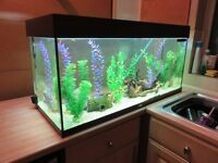 3.5ft Juwel fish tank and stand, fish included