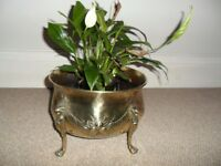 French jardiniere, brass with lion claw legs