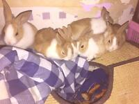 6 Bunnies for sale NEED TO GO