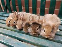 Baby Rabbits Now Available
