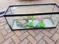 Fish tank with various pumps filters ect