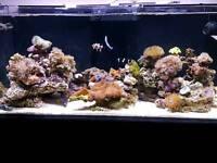 Redsea aquarium
