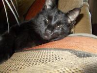 Missing cat NR5, Costessey