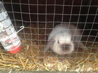 Female rabbit and hutch