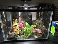 Tropical 40l fish tank