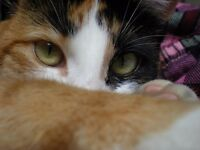 Cat and small pet sitting services across Glasgow and South Lanarkshire