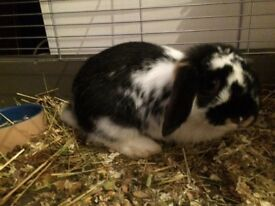 Beautiful girl Rabbit
