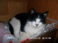 MISSING MALE CAT. HI IS VERY OLD CAT WHO IS DEAF,BLIND ON ONE EYE.PLEASE HELP.REWARD 07835278730