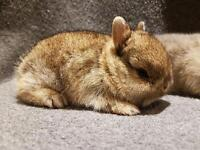 Baby rabbits ready to new home 11/07/2017