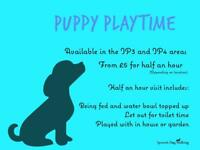 Puppy Visits | Ipswich Dog Walking | From £5 | Limited Spaces Available!! IP4 only.