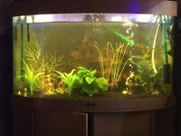 Juwel Trigon 190 corner tank