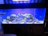 Stock from Marine Fish Tank
