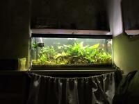 Planted tank with fish and LOADS of extras