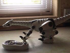 Robo dinosaur, interactive