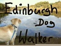 Dog walker/sitter, alone or in small pack
