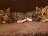 Friendly, Playful Kittens