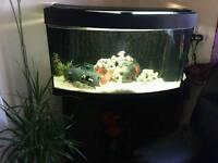 Fish tank 180 l.