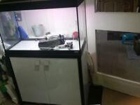 Urgent!!! Fluval Roma 125 L fish tank for sale