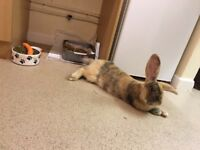 9 month old giant rabbit