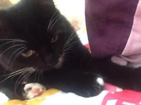 neutered female cat