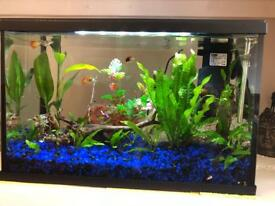 19L Fish Tank with plenty of extras