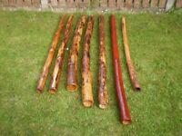 Cactus Didgeridoo