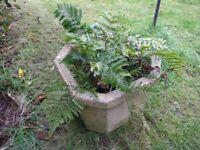 Octagonal Concrete Pot With Fern Plants In It Weymouth