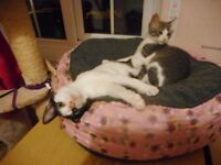 Two 5 month old kittens wanting a home together