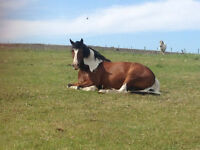 All Year Grazing for horse or pony South Hetton