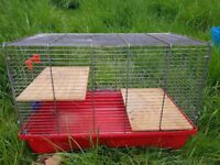 Rats/mice cage