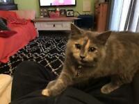 Kittens available soon