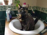 My missing female cat