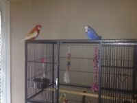Free bird rescue home all birds