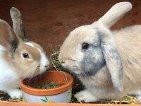 Lovely paired couple looking for forever home with double story hutch