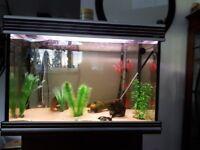 Aqua One Aquarium, Filter & Heater & Extras