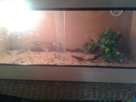 full Varuium set up, includes light, water bowl, thermometer