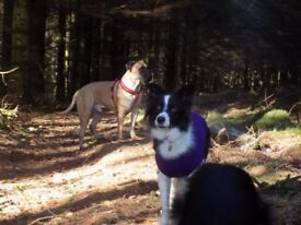 Solo Training walks for Anxious or Reactive Dogs