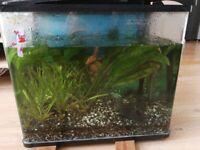Fish tank 65l.
