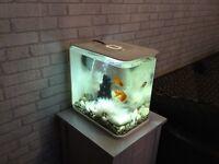30l biorb flow with fish